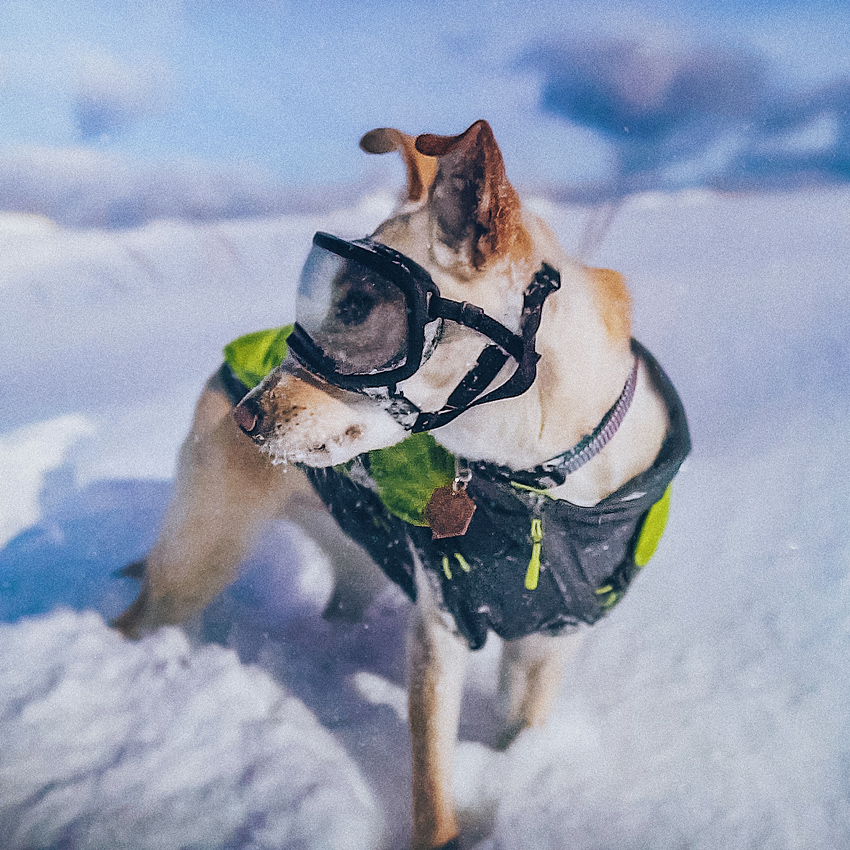 the-mitten-mutt-on-a-mission-home-x
